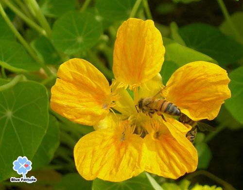 穿著黃色鞋子的蜂