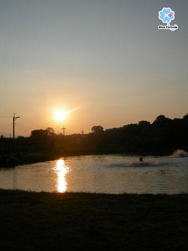 清晨的漁塭