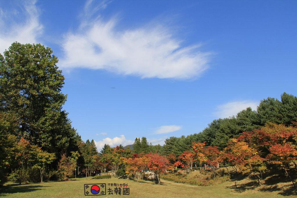 【南怡島賞楓】韓國楓葉秋天也可戀歌|搭船+超適合外拍+10月初楓葉風景美照