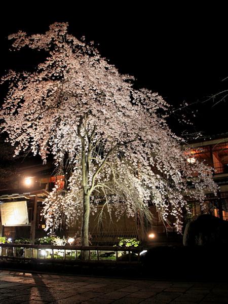 dailyfocus_kyoto0054.jpg