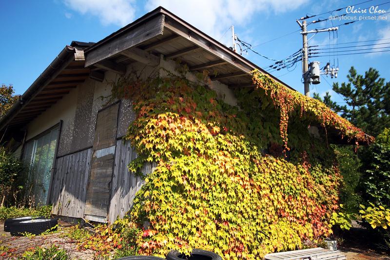 新潟0532.jpg