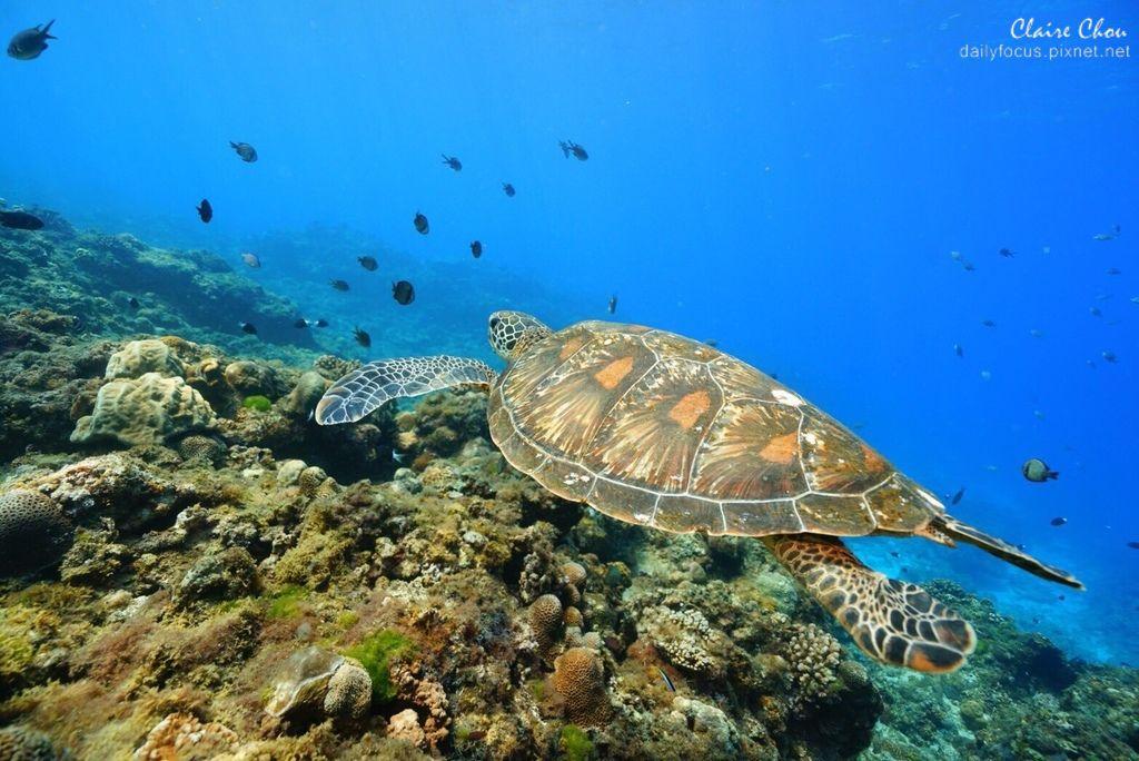 小琉球海龜.jpg