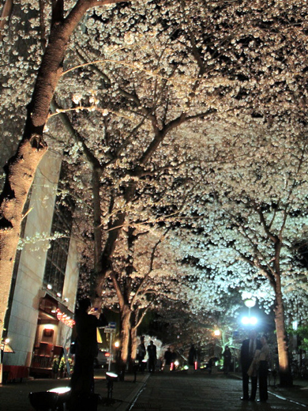 dailyfocus_kyoto0053.jpg