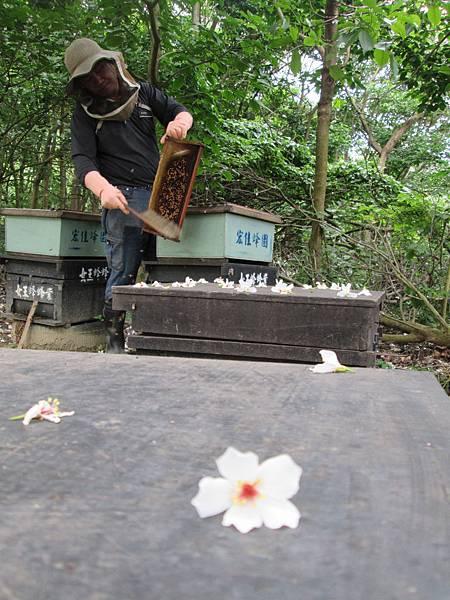 收集蜂巢10