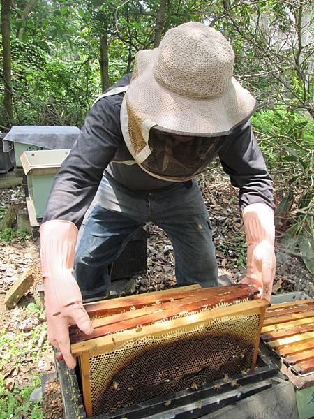 收集蜂巢1
