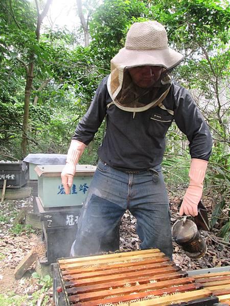 收集蜂巢11