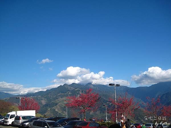 山櫻花配白雪,好可惜臨時起意沒帶單眼.jpg