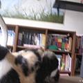 [2Y11M20D] 葦妤和書櫃