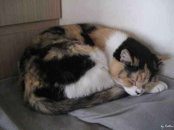 為什麼睡MARU的位置?
