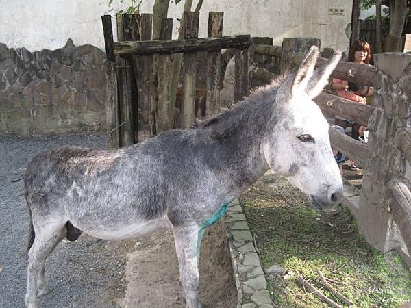 [3Y0M17D]這隻驢子叫福仁,可以用柵欄上掛的刷子幫他刷刷毛 ^皿^