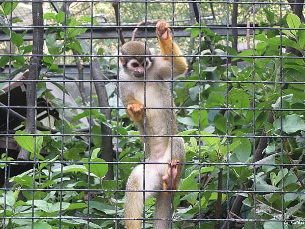 [3Y0M17D]松鼠猴