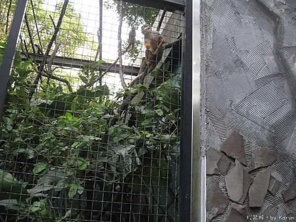 [3Y0M17D]不知道妞妞想拍照的點在哪,他並沒有特別喜歡猴子 XD