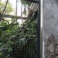 [3Y0M17D] 不知道妞妞想拍照的點在哪,他並沒有特別喜歡猴子 XD