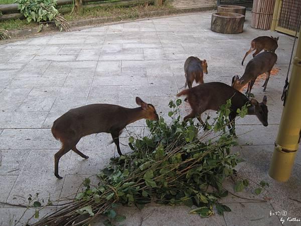 [3Y0M17D]小松鼠就是來偷吃胡蘿蔔的!