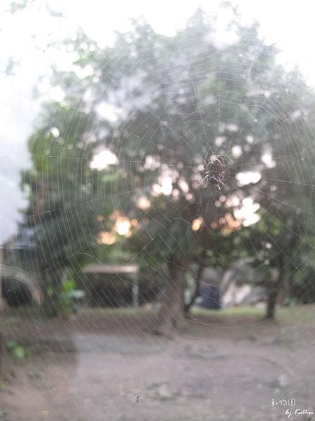 [3Y0M17D]偉大的天然工程—蜘蛛網