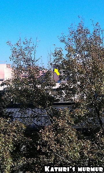 辦公室窗邊的鳥巢 <3