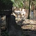 [4Y4M27D] 弓角羚羊.jpg