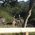 [4Y4M27D] (想要訴說什麼?)長頸鹿家族.jpg