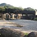 [4Y4M27D] 大象.jpg