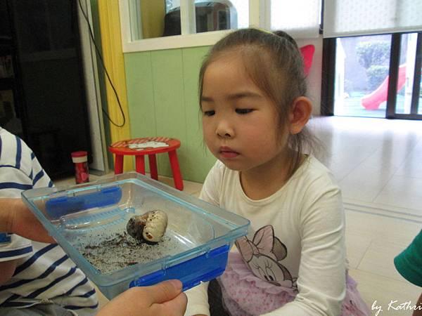 自然田園教學140415_昆蟲的寶寶-觀察昆蟲寶寶的生長方式與行為.JPG