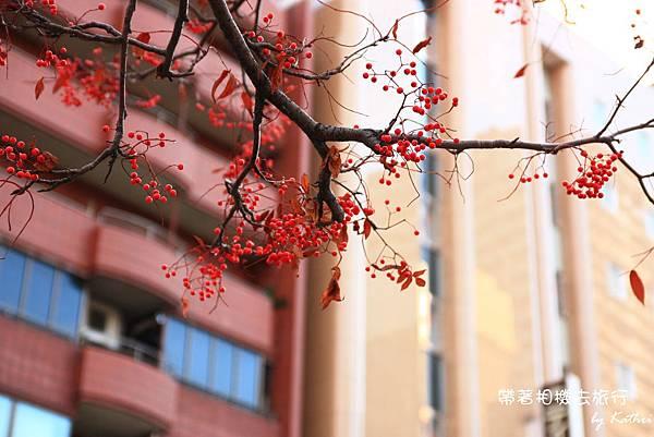 豔紅果子.jpg