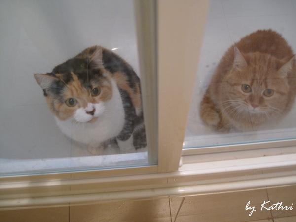 等待洗香香的貓.jpg