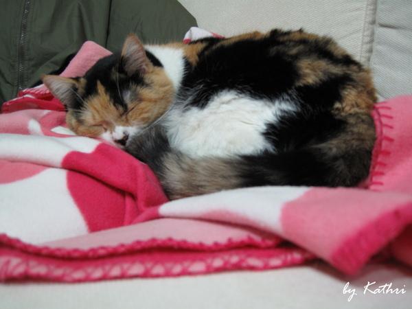 在新放的毛巾毯上睡香香.jpg