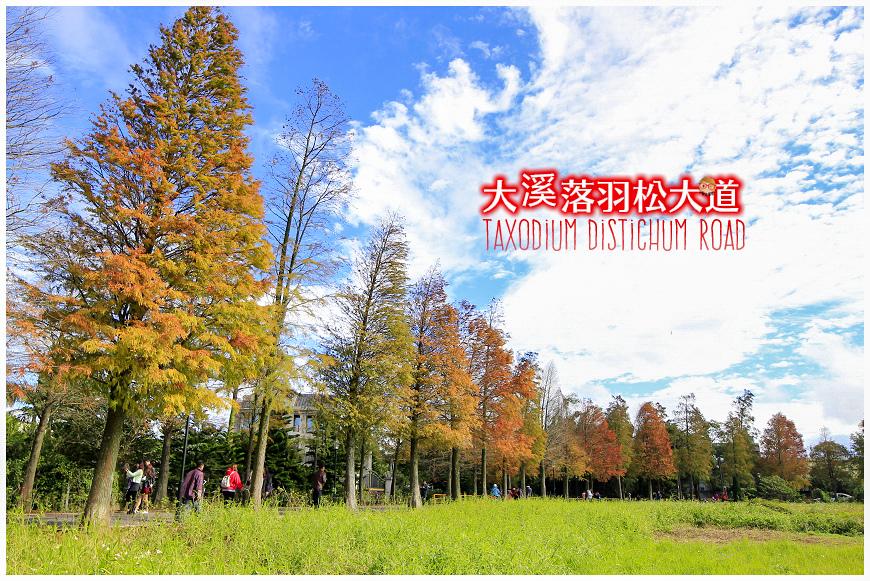落羽松 (1).jpeg