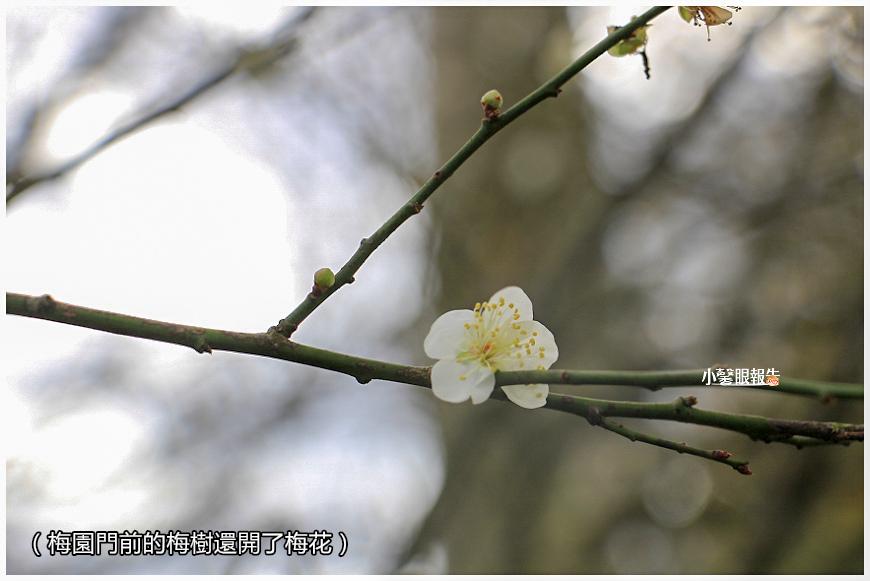 落羽松 (12).jpeg