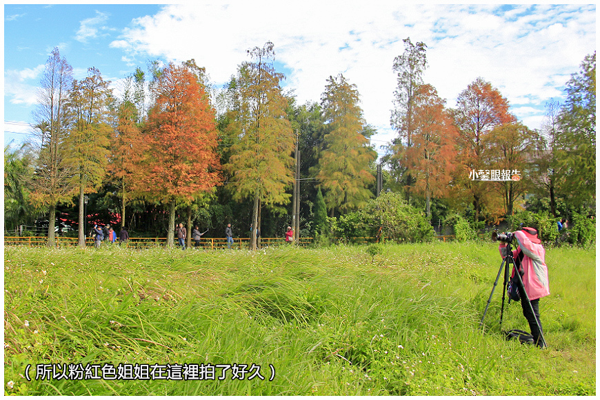 落羽松 (30).jpeg