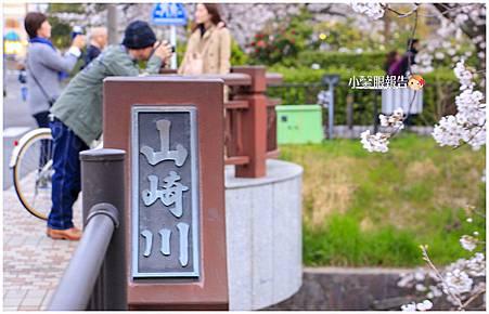 山崎川櫻花之路 (2).jpeg