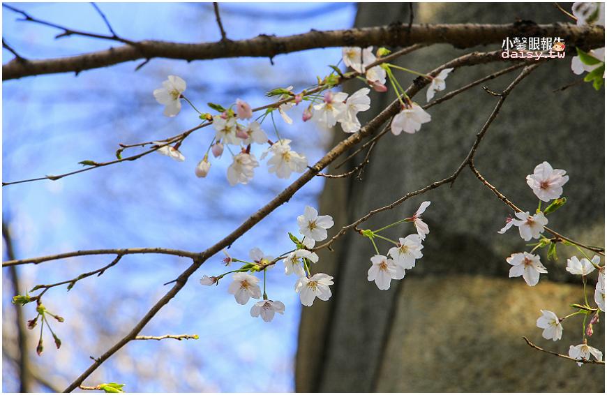 aichi-gokoku (6).jpg