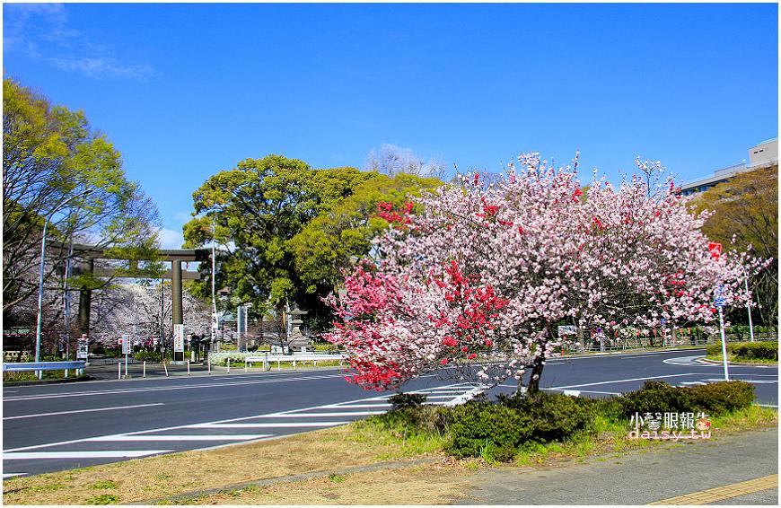 aichi-gokoku (7).jpg