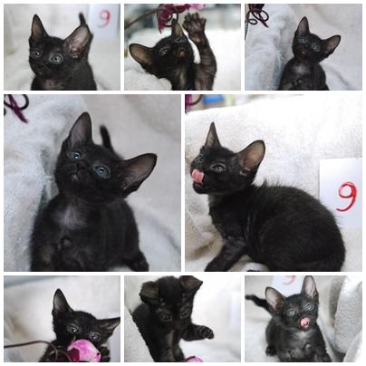 cats-9.jpg
