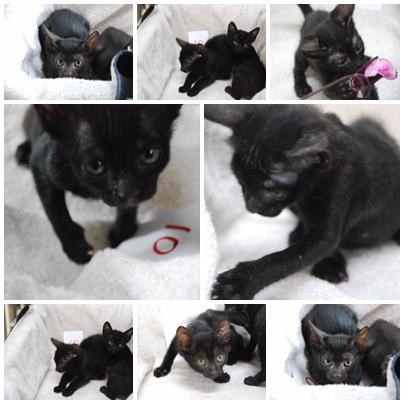 cats-1011.jpg