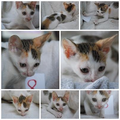 cats-8.jpg