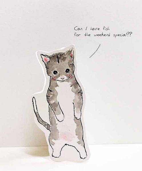 grey-kitten