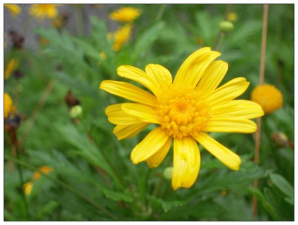 屬於我們的夏日大挑戰 Day15 - 花朵