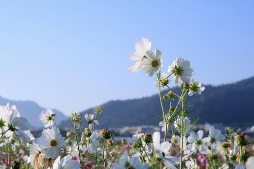 新社花海07.jpg
