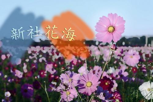 新社花海01.jpg