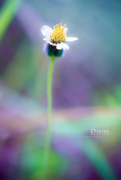 DAKIKI_DSC05303