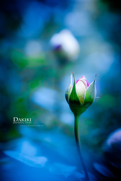DAKIKI_DSC05422
