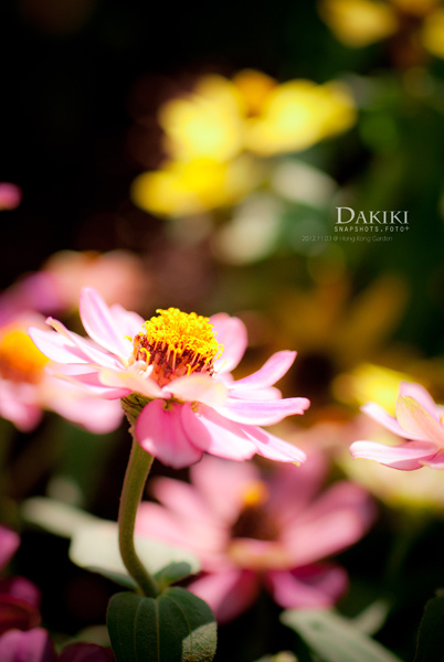 DAKIKI_DSC05346