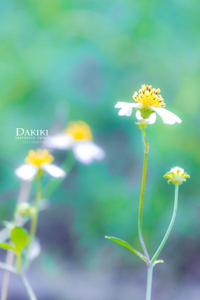 DAKIKI_P1040085