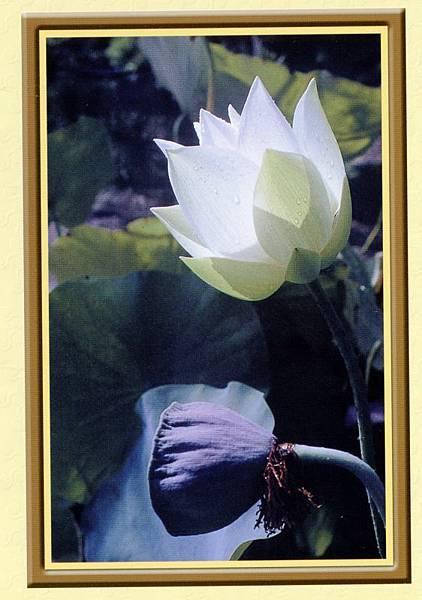 佛教電子書圖片-084
