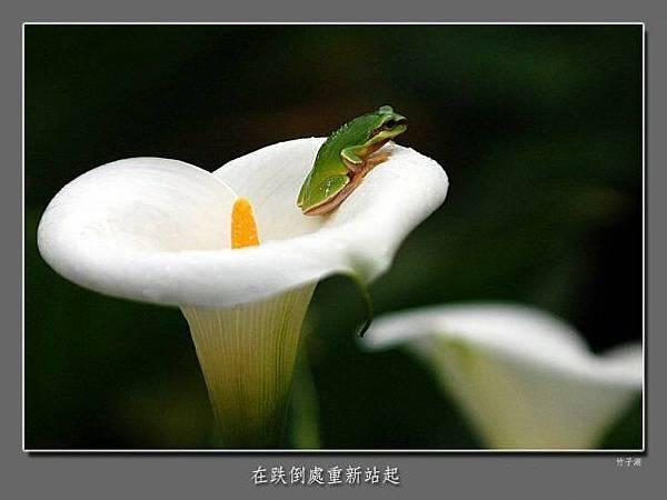 佛教電子書圖片-097