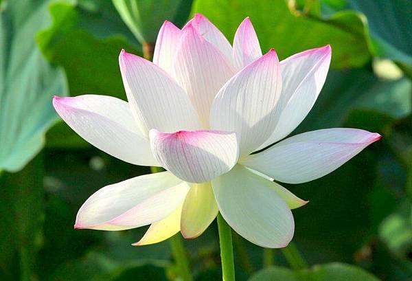 佛教電子書圖片-190