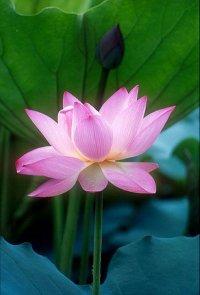 佛教電子書圖片-229