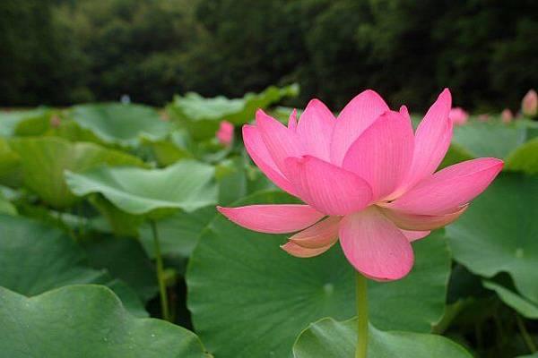 佛教電子書圖片-325