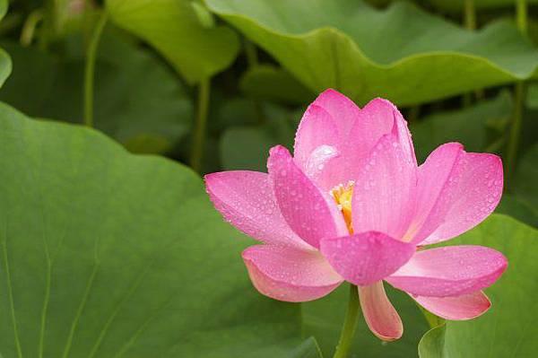 佛教電子書圖片-350